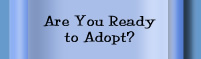 Are You Ready to Adopt?