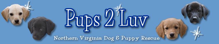 Pups 2 Luv
